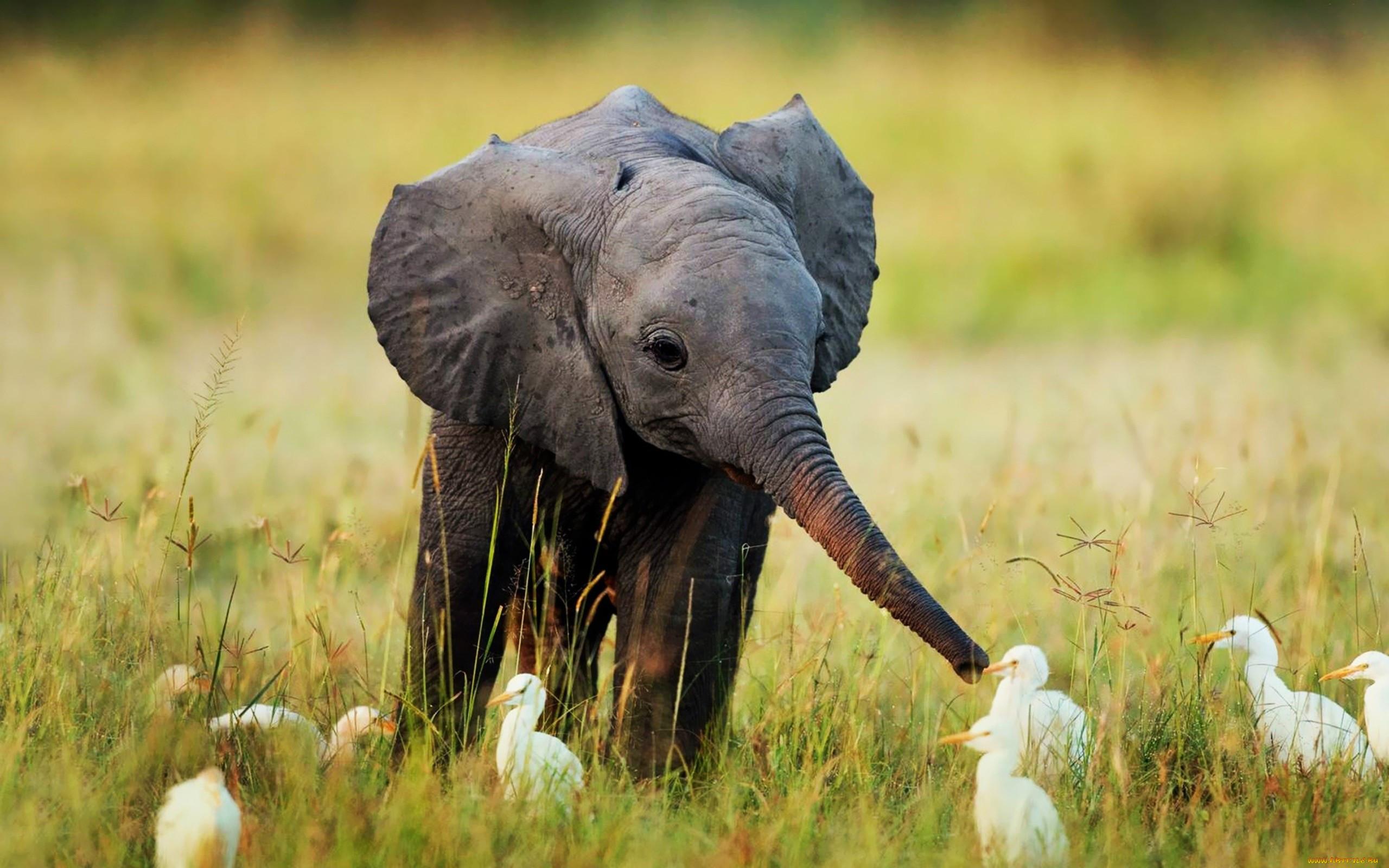 картинки большие животные и маленькие ногти